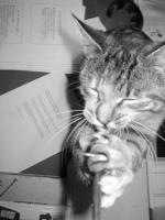 184_cat-strap.jpg